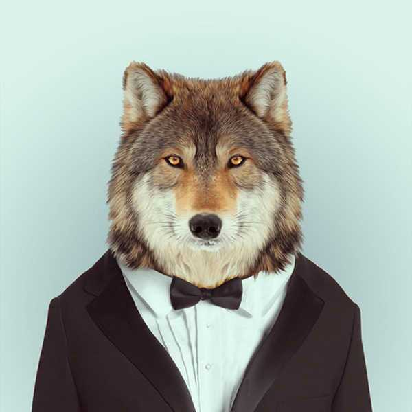 남자 늑대.jpg