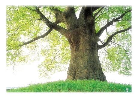나무의자태.jpg