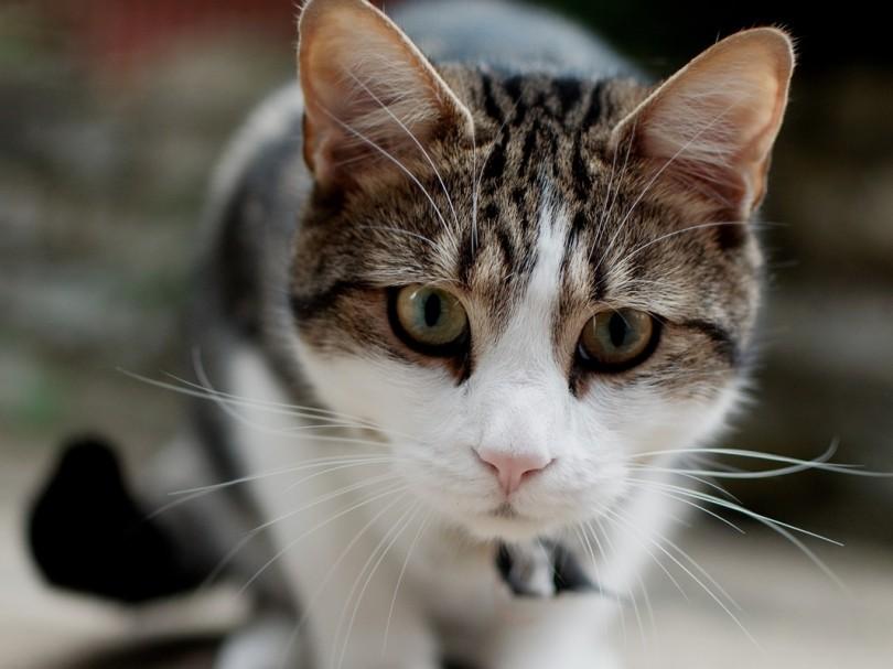 고양이를 아시나요.jpg