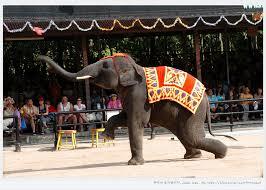 코끼리 쇼.png